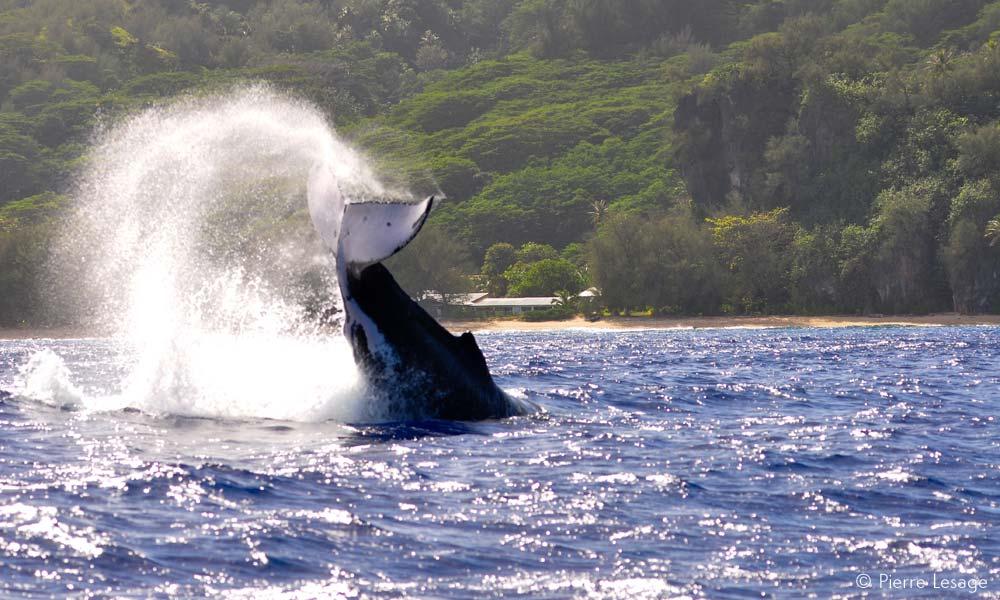 Austral Islands Including Raivavae Rurutu Tubuai