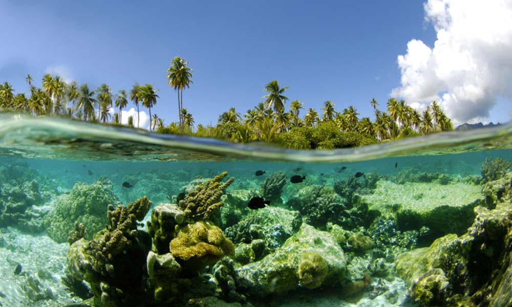 Taha 39 A Island Tour And Its Coral Gardens Full Day
