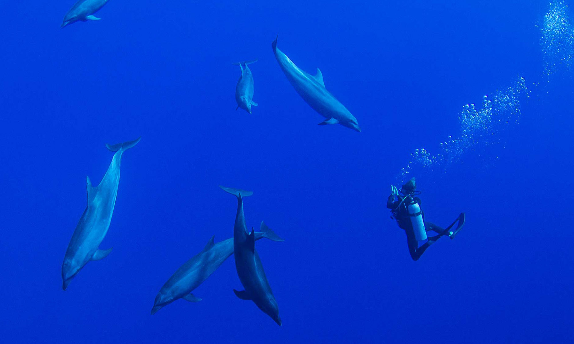 Dive with Dolphins in the Tiputa Pass
