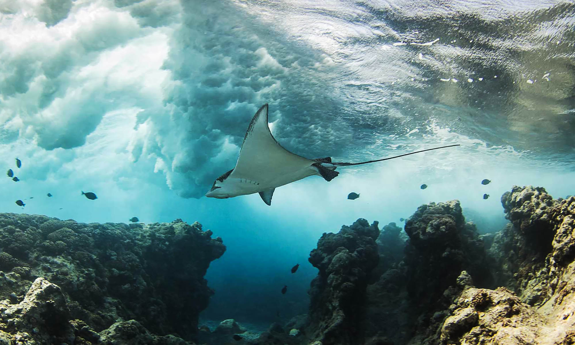 6 Passengers, Diving with Manta Rays