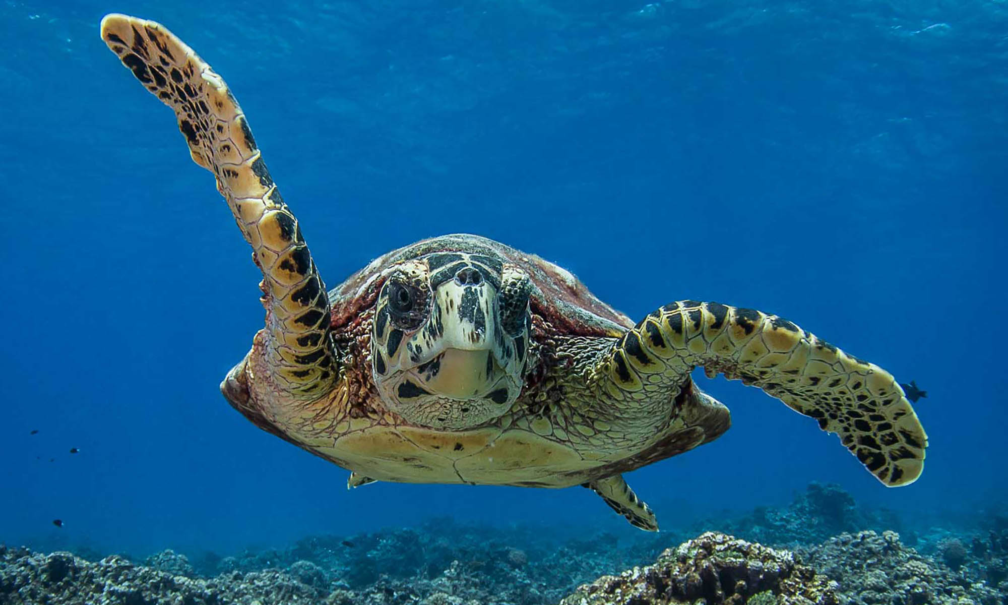 Enjoy close encounters with marine species such as the sea turtle