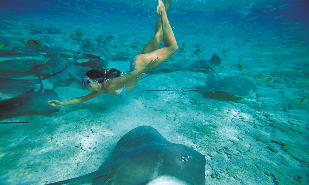 Shark Amp Stingray Snorkel Tour Things To Do In Bora Bora