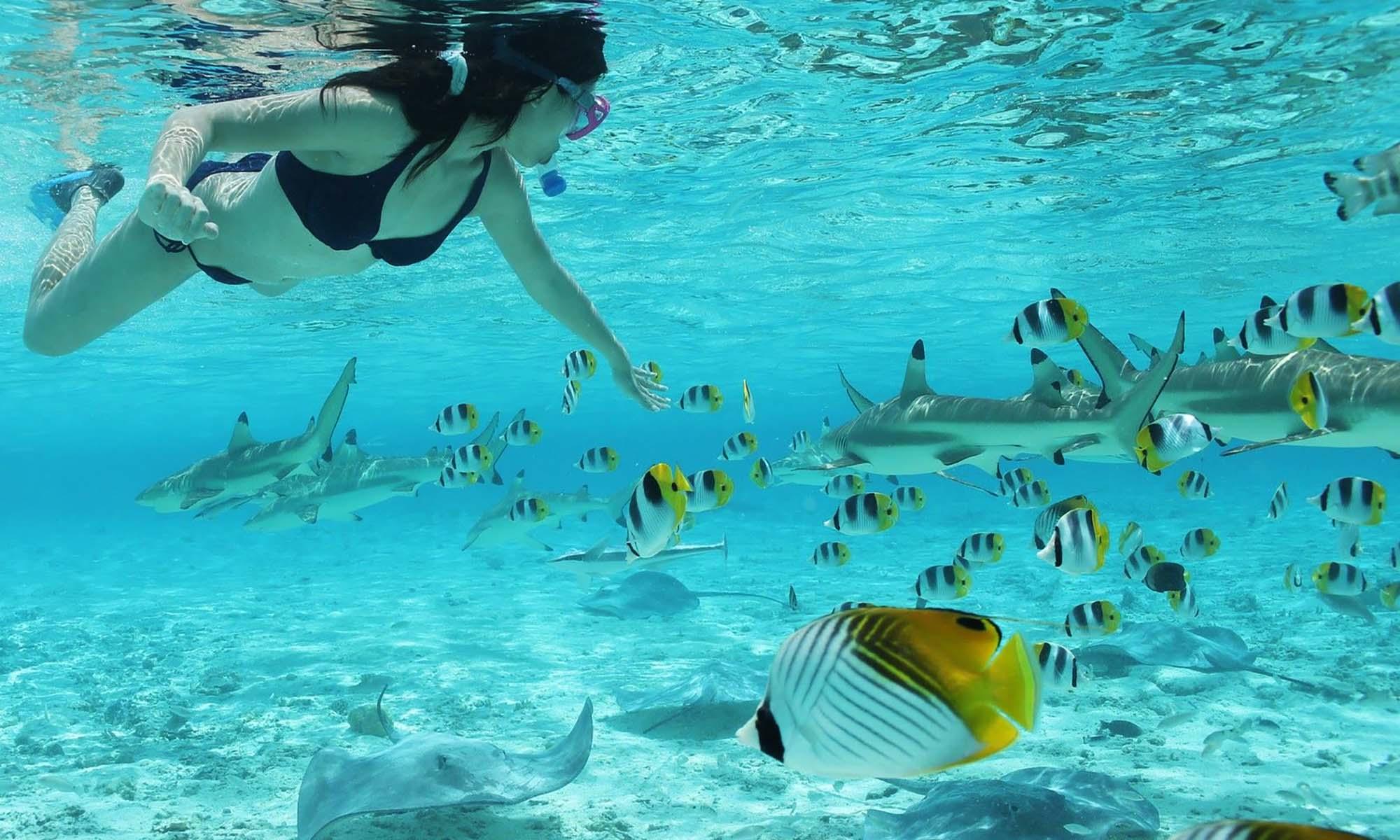 Shark & Stingray Snorkel Tour, Things to do in Bora Bora