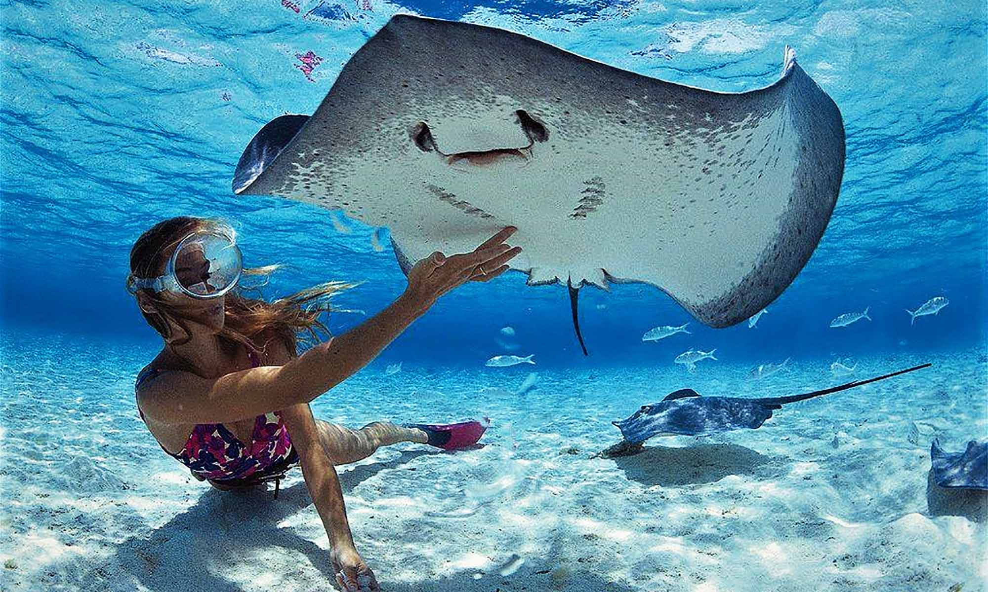 Captain Taina Glass Bottom Boat and Snorkeling Tour, Swimming with Rays