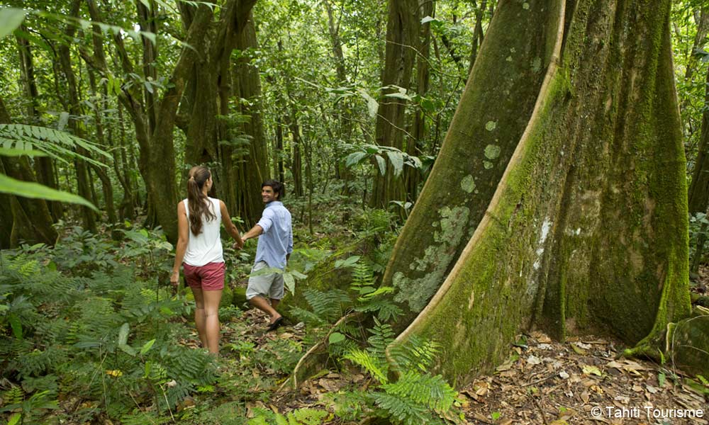 Moorea Hiking Discovery, magnificent trees