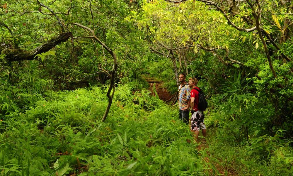 Moorea Hiking Discovery, Verdant Interior