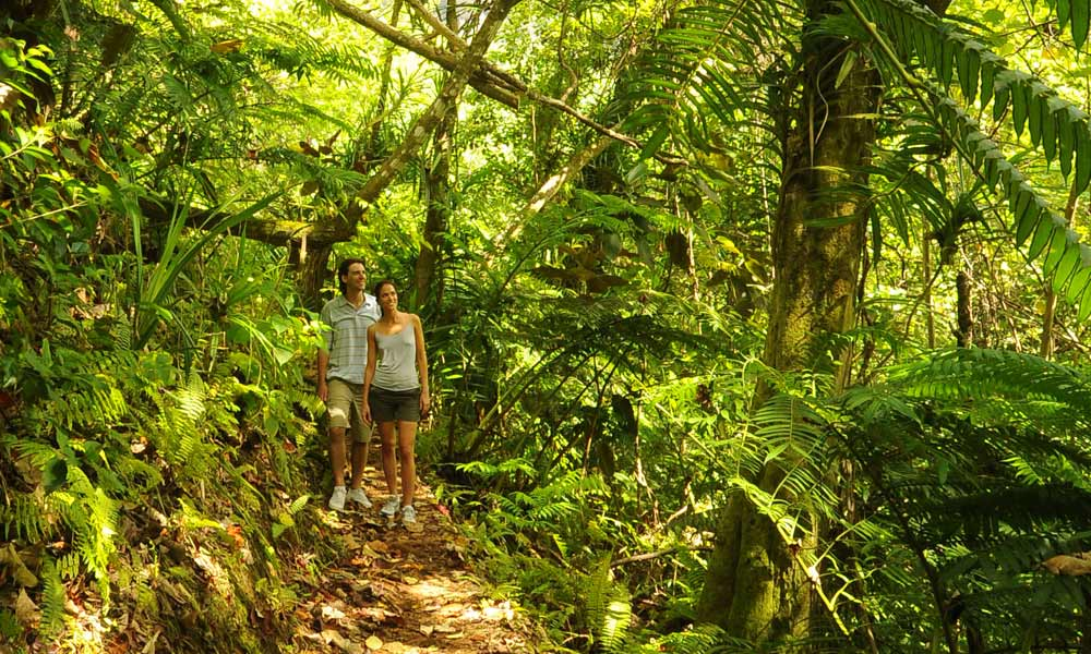 Moorea Hiking Discovery, under the canopy
