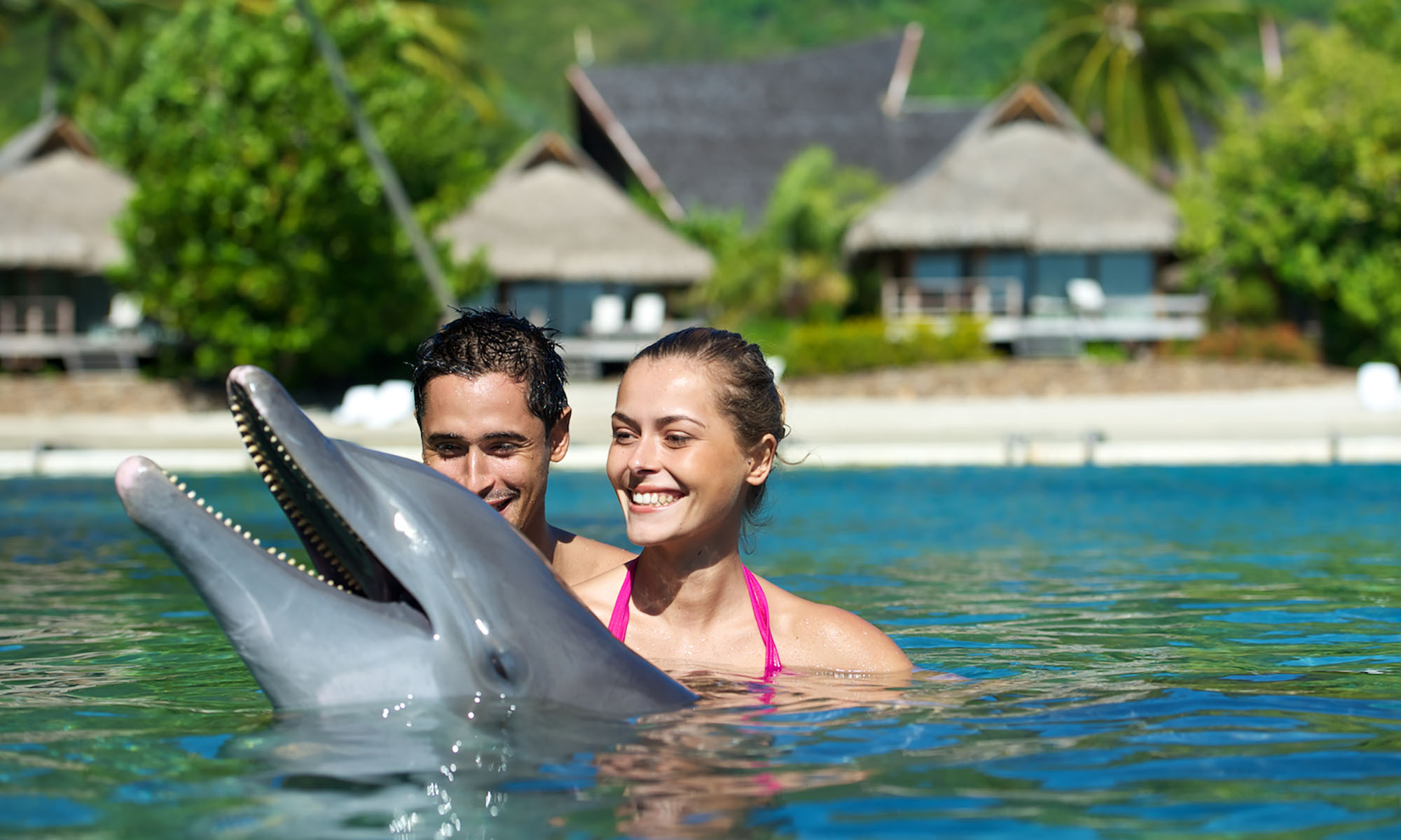 InterContinental Moorea Resort & Spa, Swimming with Dolphins