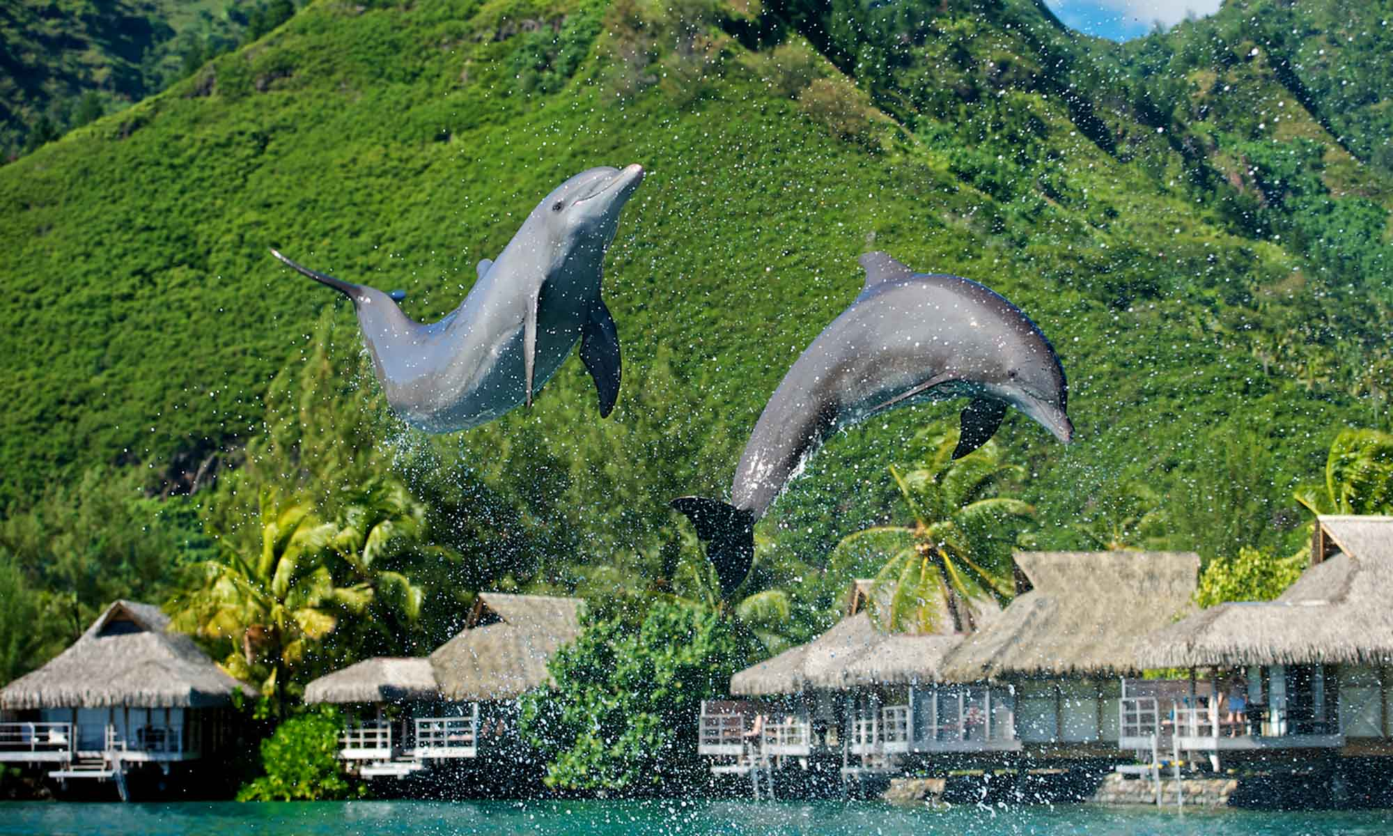 InterContinental Moorea Resort & Spa, Moorea Dolphin Center