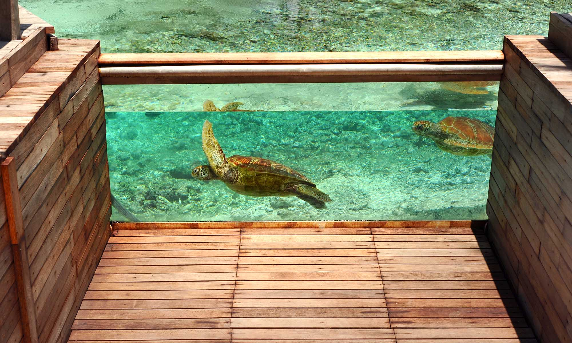 Le Meridien Bora Bora, Turtle Center