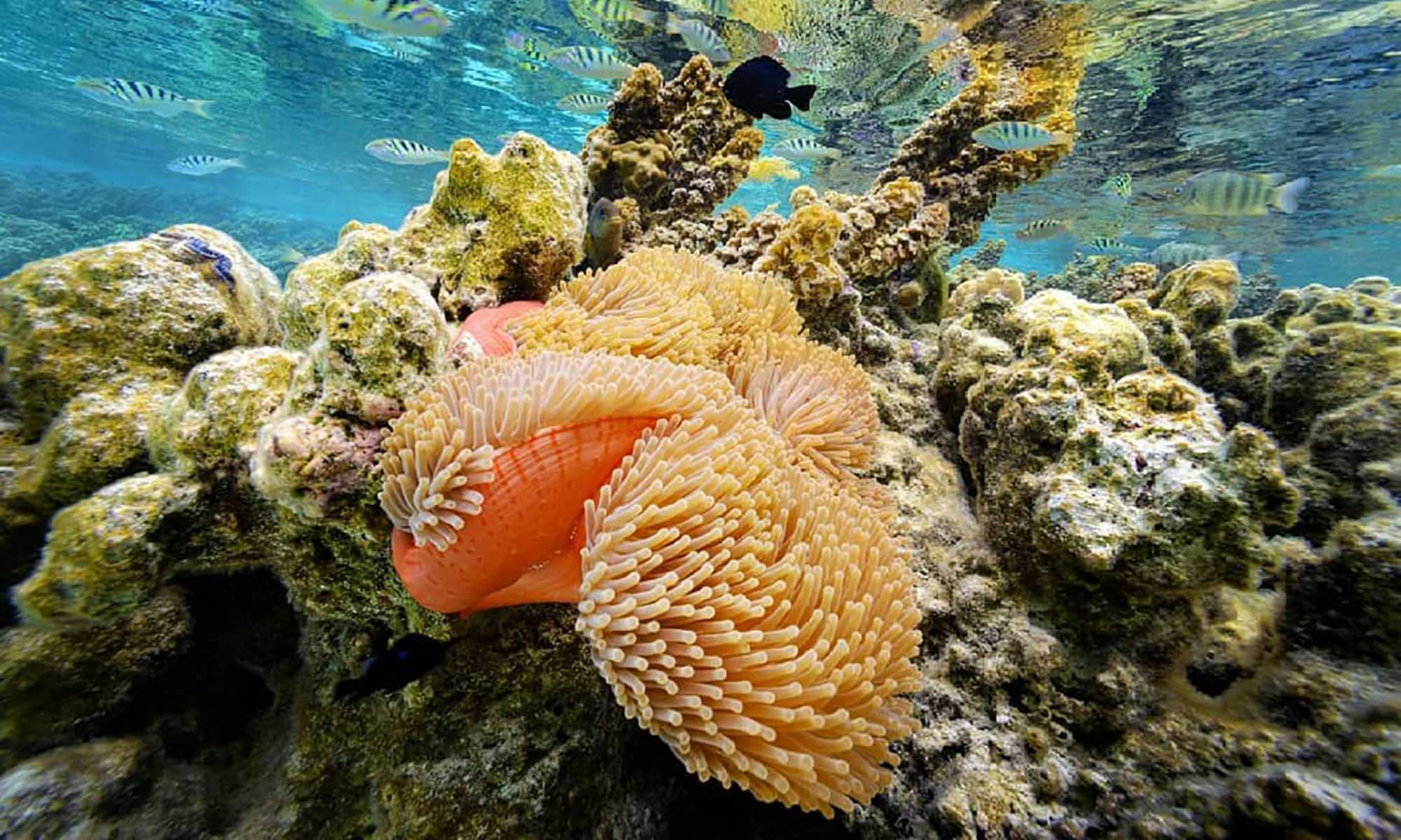 Le Taha'a Island Resort & Spa, Drift Snorkeling in the Coral Garden