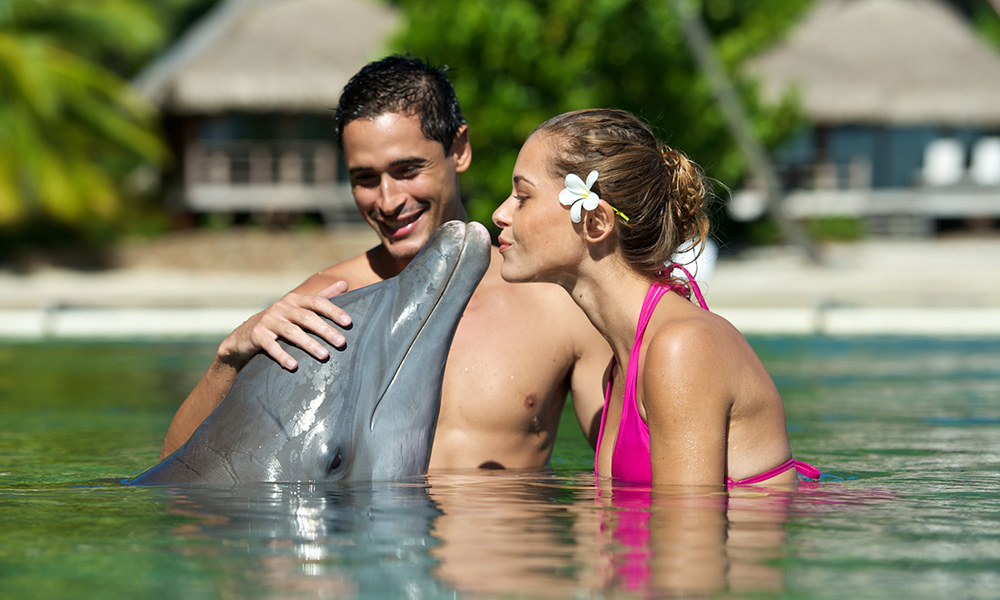 Dolphin Encounters at the InterContinental Moorea Resort's Dolphin Center