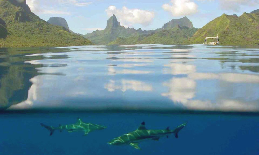 Moorea Adventure, shark spotting