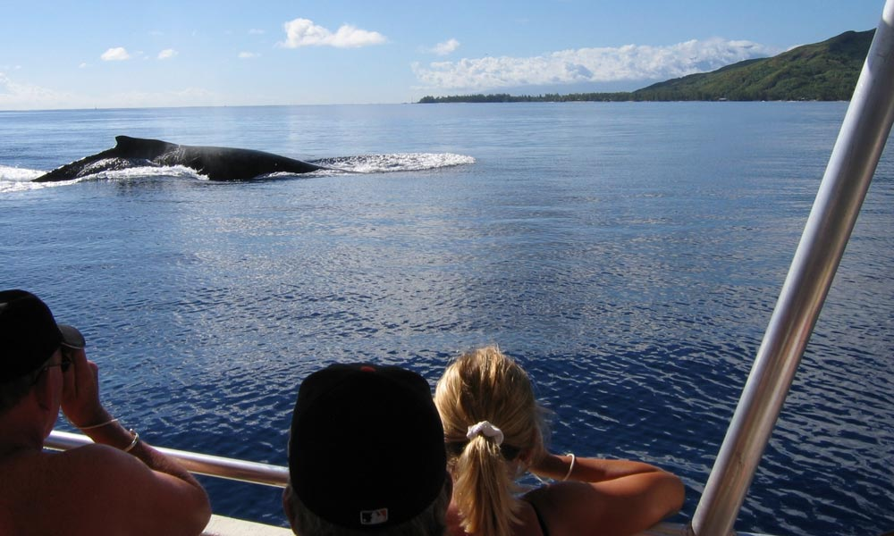 Dr. Michael Poole's Dolphin & Whale Watching Expedition