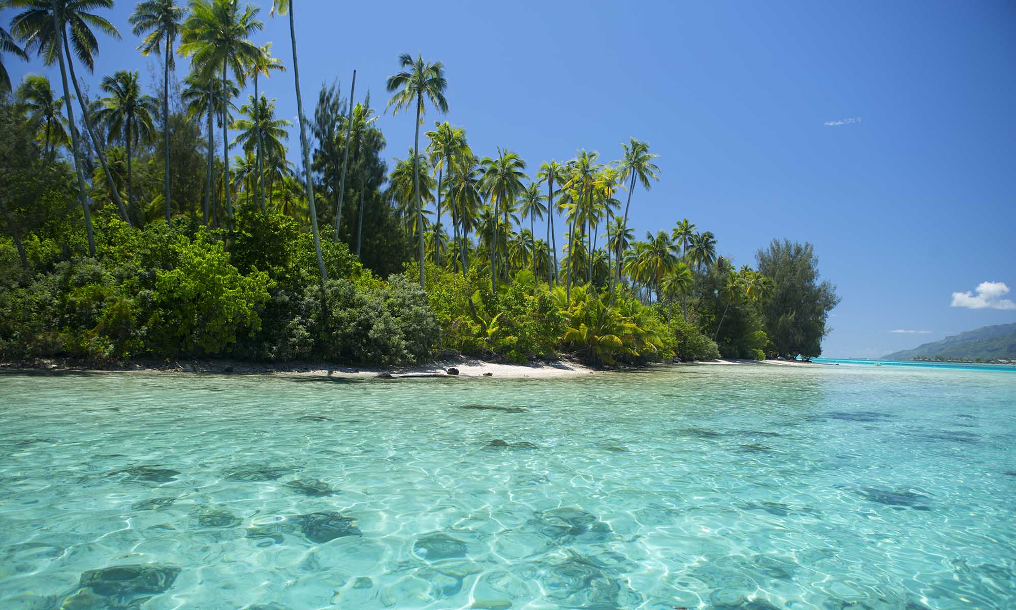 Moorea Day Tour with Motu Picnic