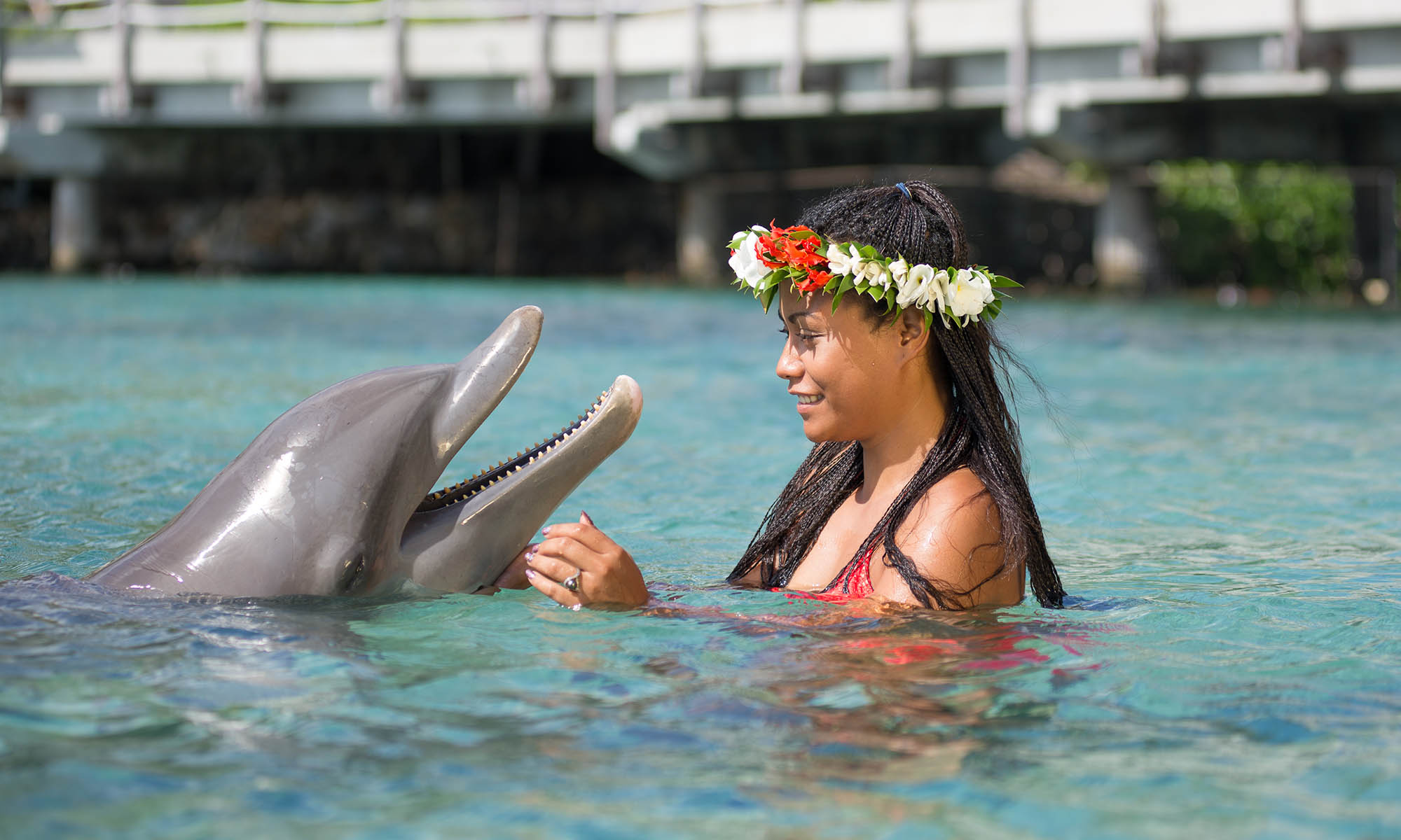 Moorea Dolphin Center, Shallow 'Miti' Encounter