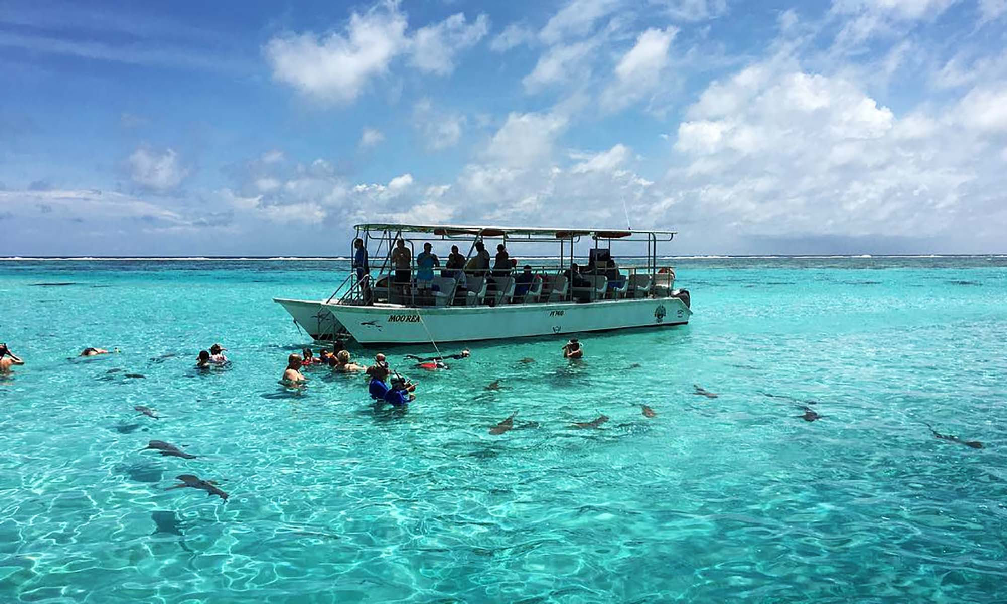 Snorkeling and Ray Feeding Tour on Moorea