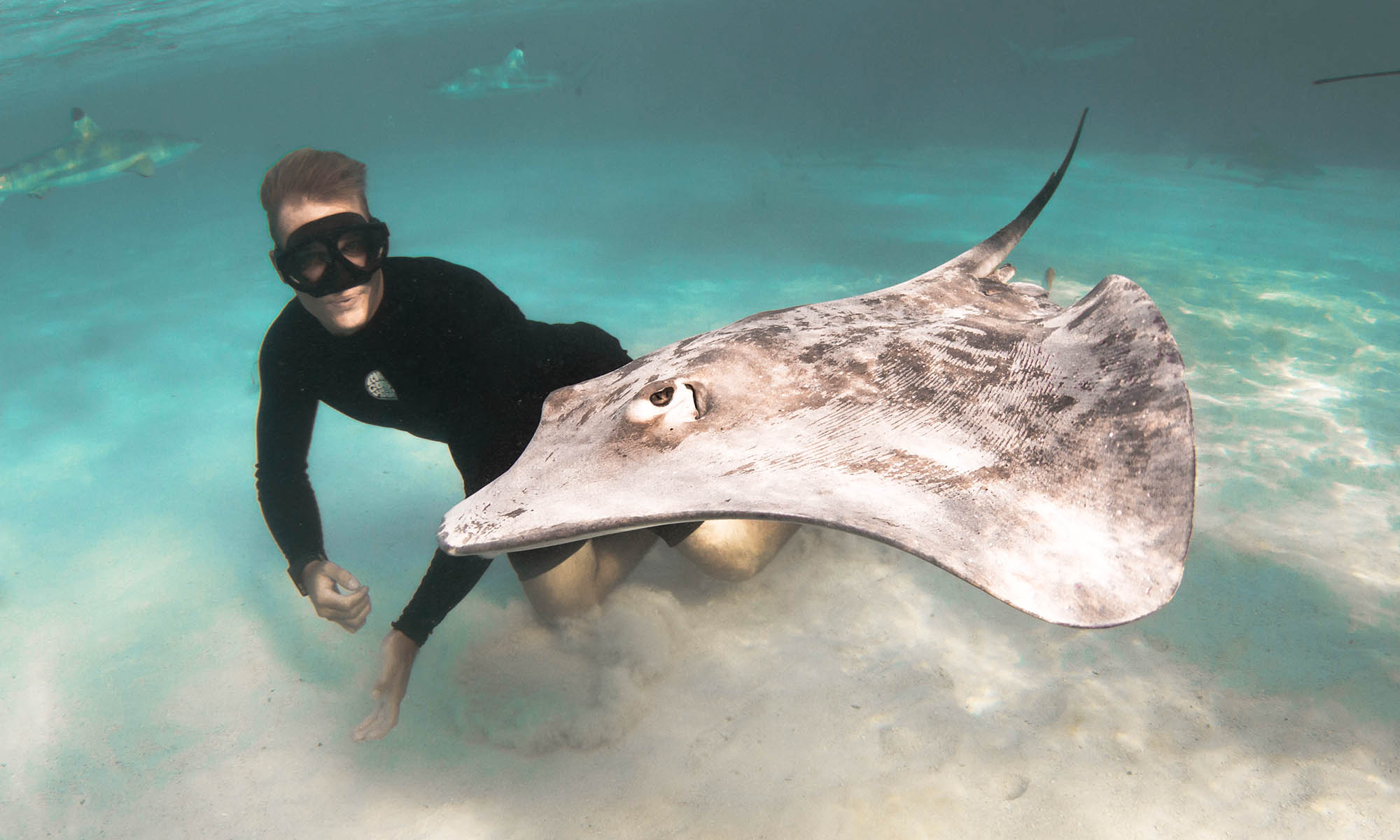 Private Tiger Shark Snorkeling Excursion on Moorea