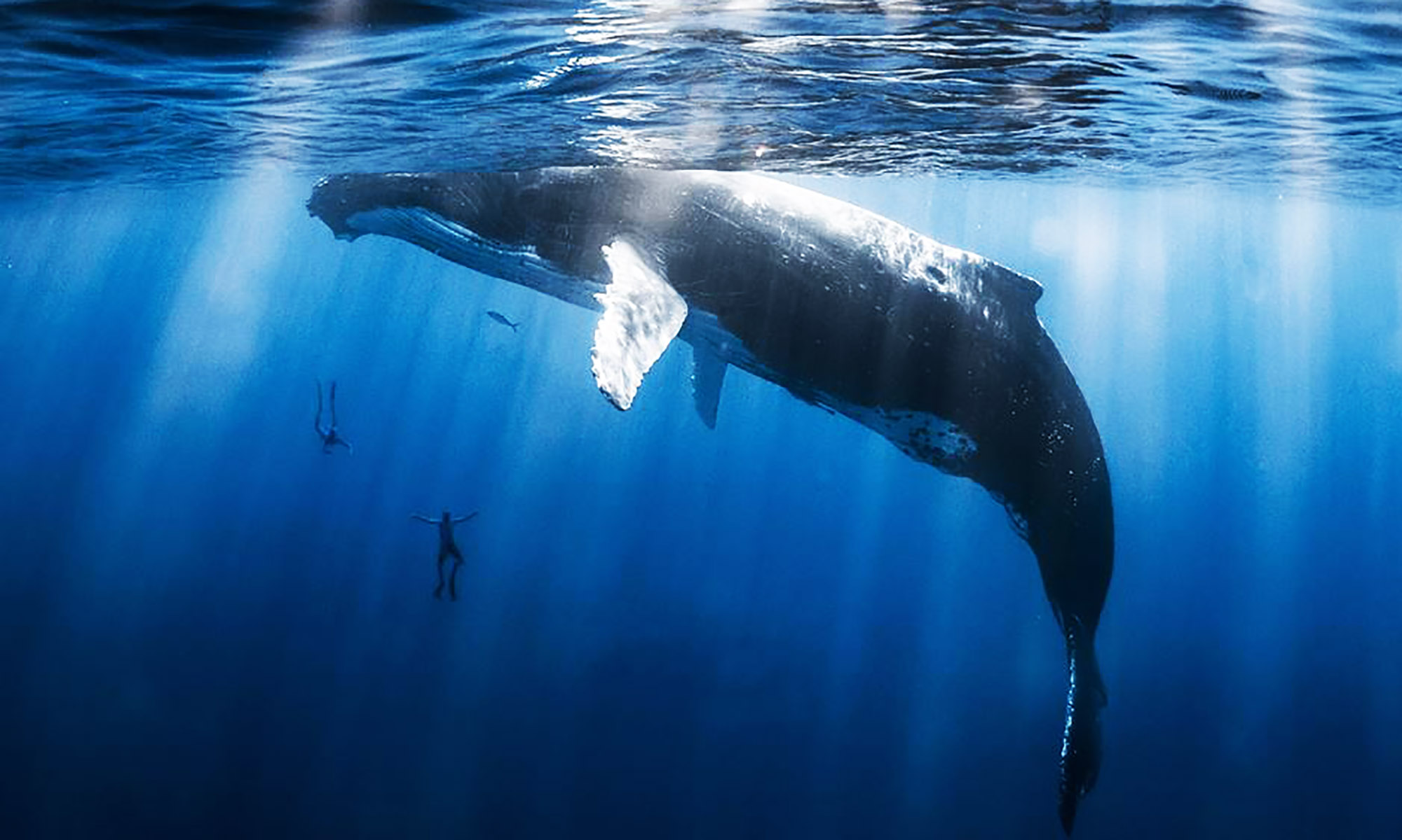 Private Humpback Whale Swim & Snorkel Tour on Moorea