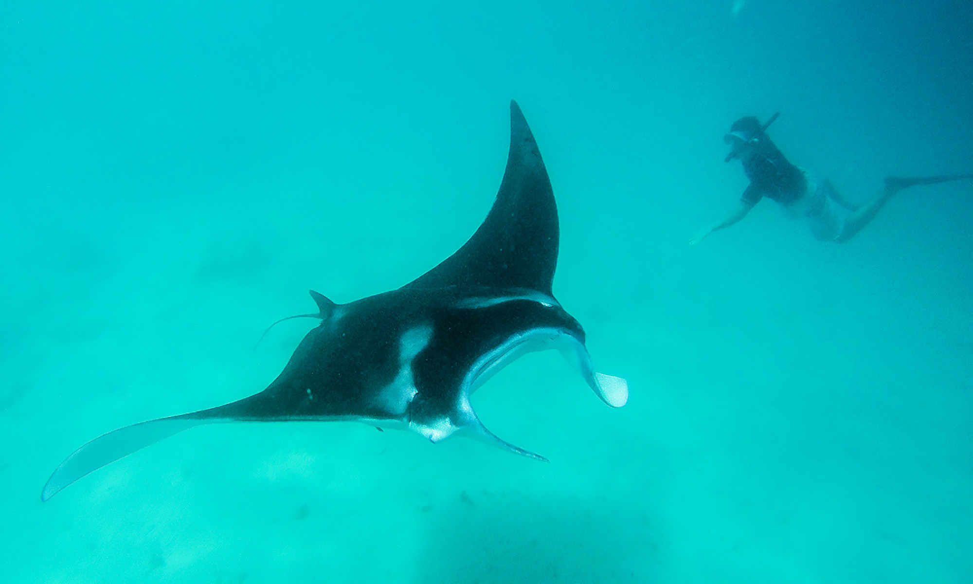 Ninamu Resort, Snorkeling with Manta Rays