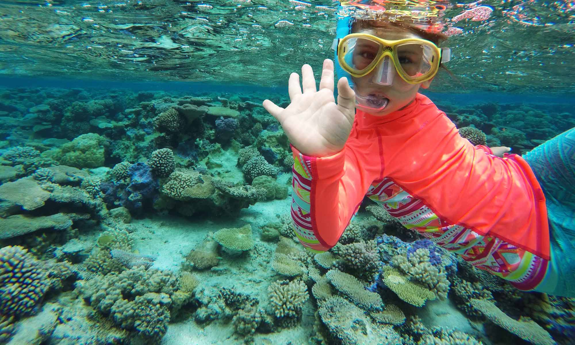 Pure Snorkeling by Reef Discovery