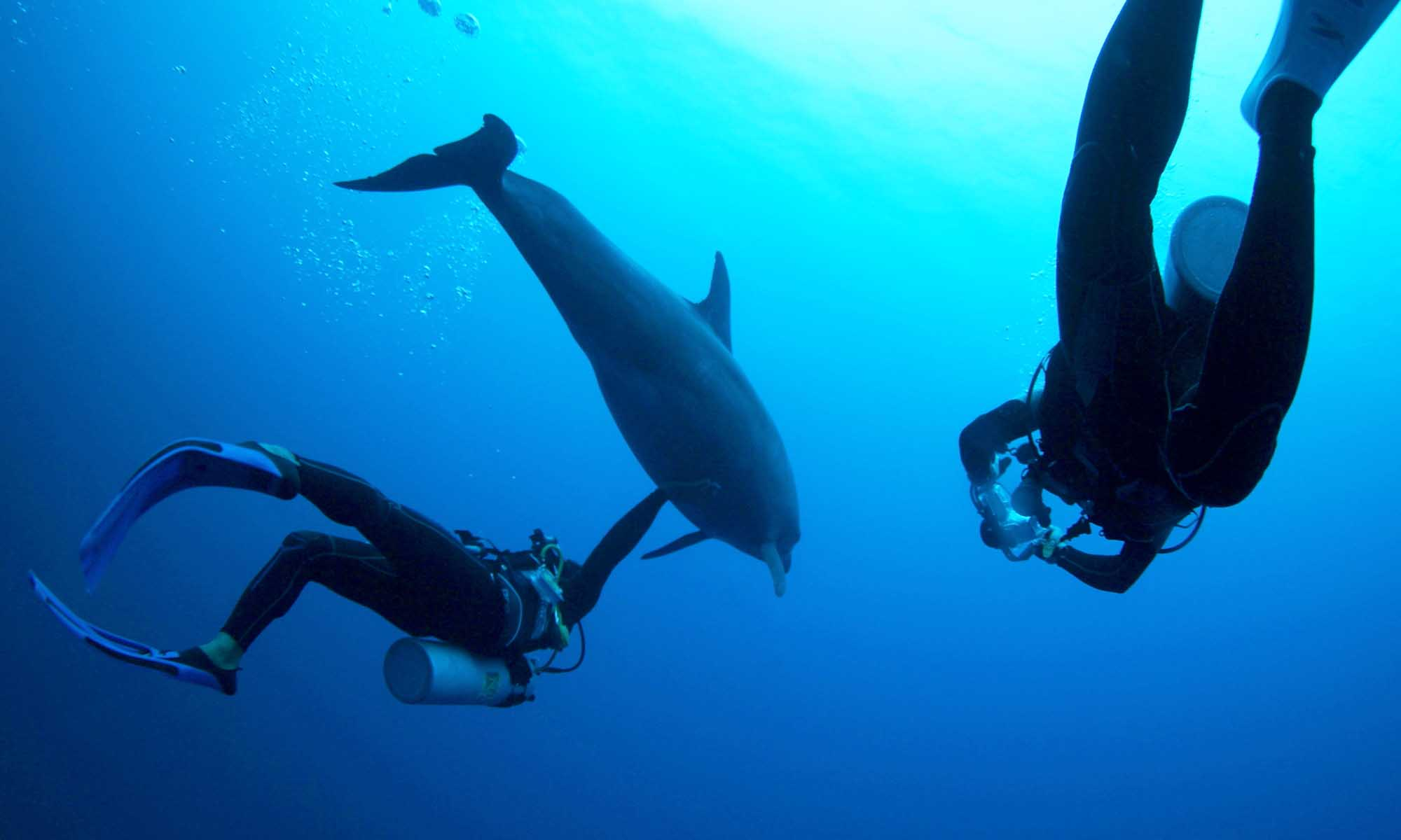 Diving with Dolphins on Rangiroa