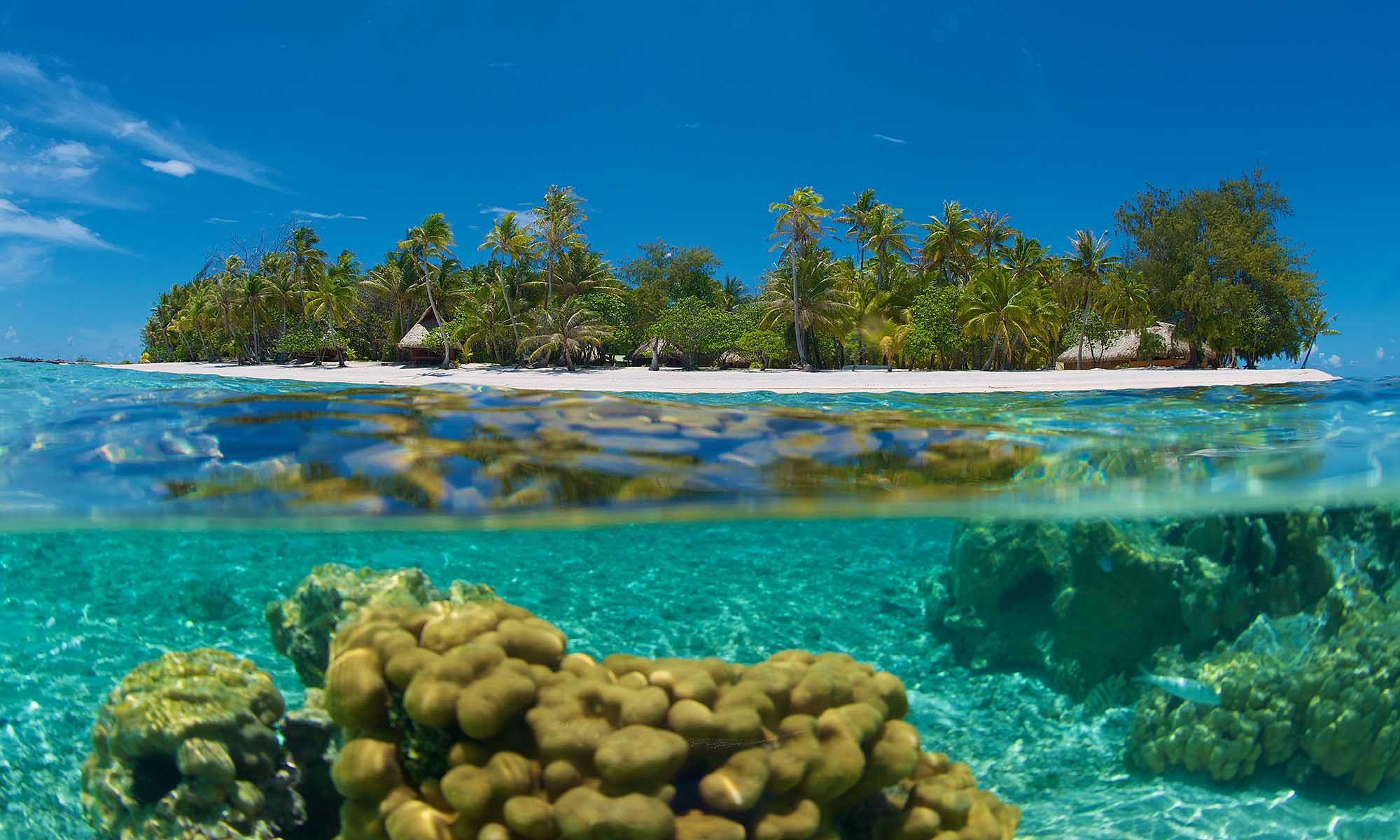 Coral and Marine Life in Rangiroa's Lagoon