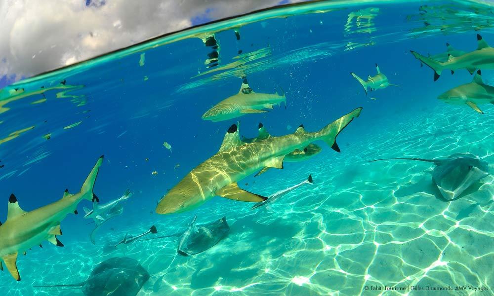 Taha A Lagoon Safari Le Taha A Resort And Spa Tahiti Com