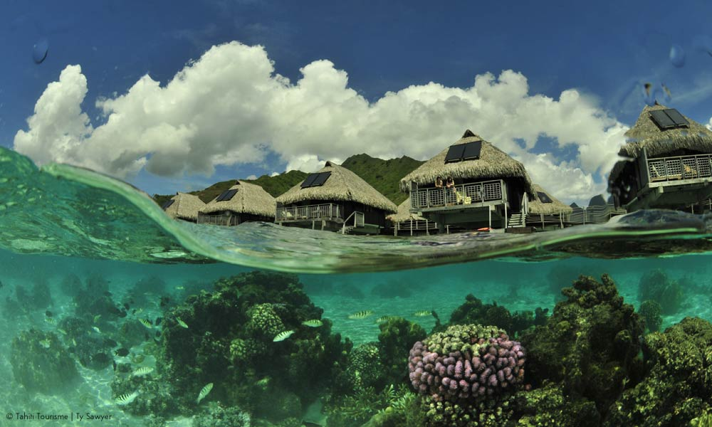 Bora Bora below the surface