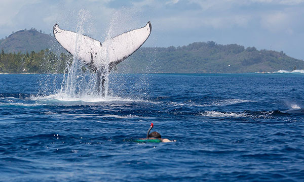 Reef Discovery Whale Watching Tour