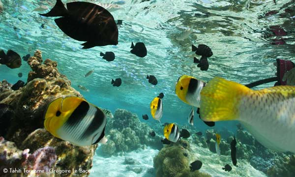 Huahine Natural Aquarium Excursion