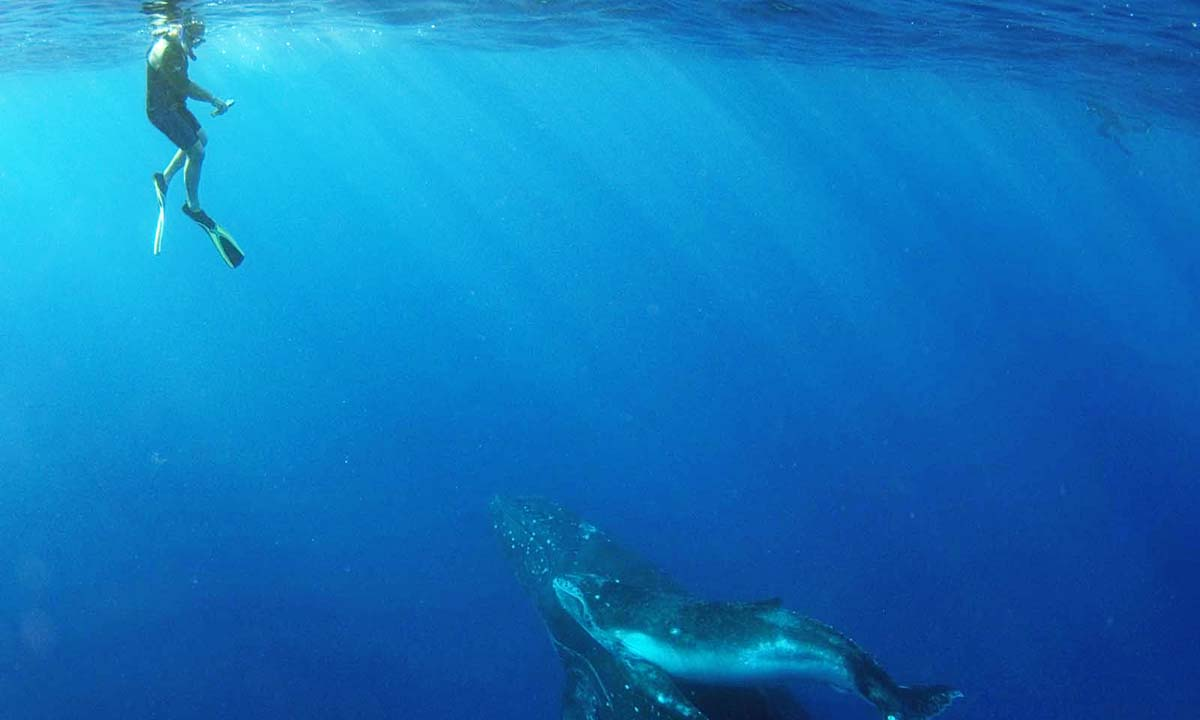 Private Humpback Whale Swim Tour