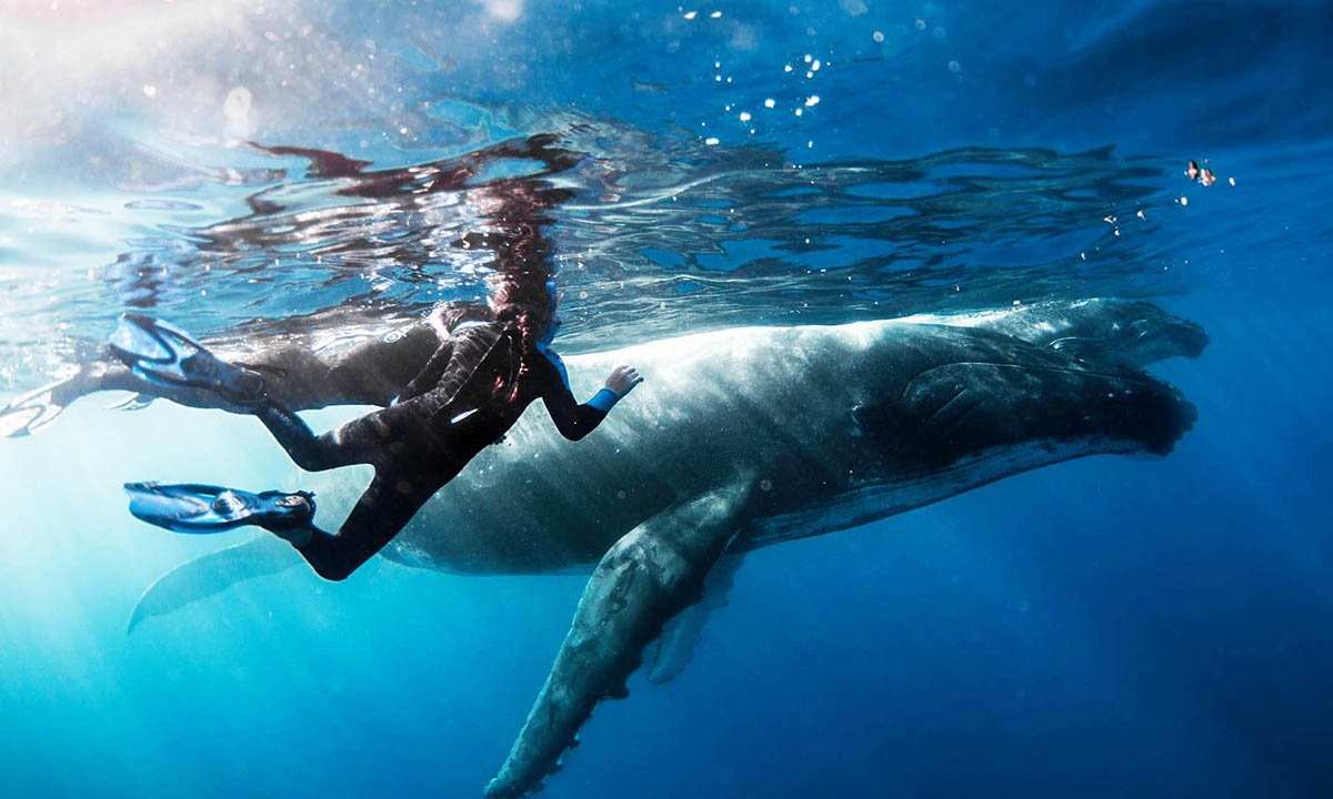 Private Humpback Whale Swim & Snorkel Tour