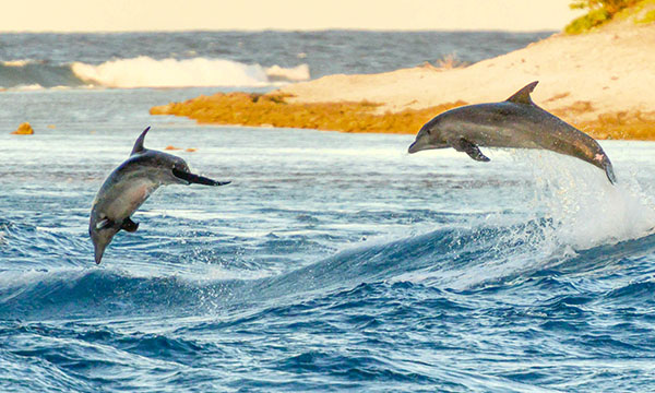 Dolphin Watching in the Tiputa Pass