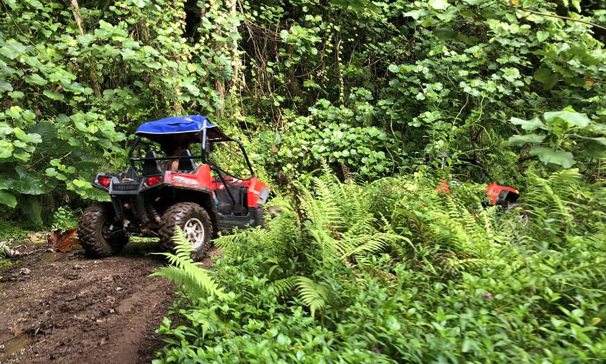 4x4 Safari & ATV Adventure with Lunch